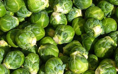 Thanksgiving's Cooking: Brussels Sprout Bake